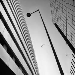 Lines by JoseMelim