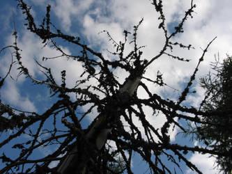 Copacu moare by andrei-gl