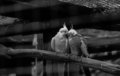 Birdhouse Love by xe3tec