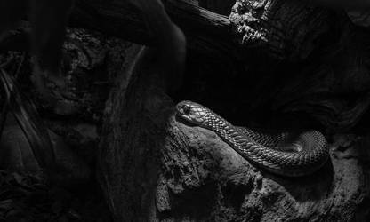 unknown snake by xe3tec
