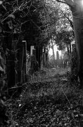 Vienna Central Graveyard I by xe3tec