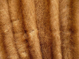 fur texture by LadyWoodsheartSTOCK