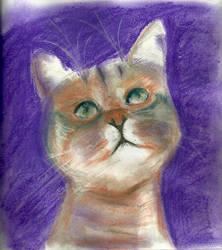 Kitty by missskywalker