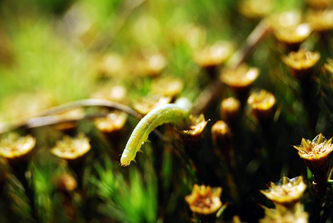 caterpillar by XanTyp