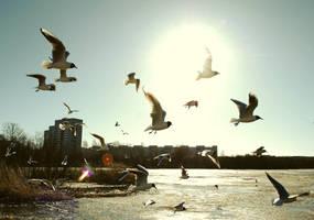 gulls and the Sun by ljenda