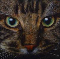 Cat face by GW78
