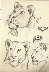 Lioness by RochaSketch