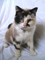 Cat 5 by spleen-queen-stock
