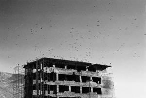 Ptice by CanusLilium