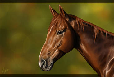 Equine Portrait II by a-Astree