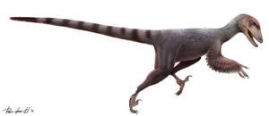 Deinonychus antirrhopus by PREHISTOPIA
