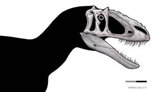 Yutyrannus shaded skull by PREHISTOPIA