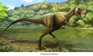 Gorgosaurus libratus by PREHISTOPIA
