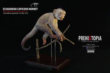 Ecuadorian capuchin monkey - Mono Machin by PREHISTOPIA