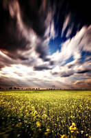 Fields by yyan