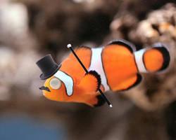 Fancy Fish by mcormickk