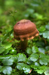 Anticosti Mushroom by amok451