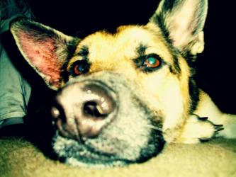 doggy2 by paprika98