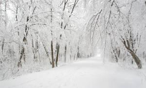 Winterwald by ssilence