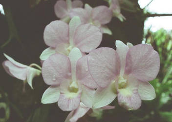 Orchids9 by gombloh75