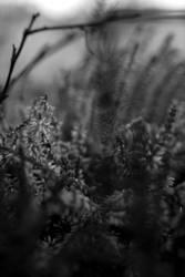 Haze by Choiseul