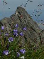 Tatra's flowers by zojj