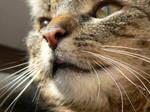 Cat's portrait by zojj