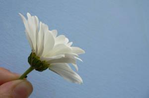 flower 1 by zojj