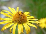 bugs on the flower by zojj