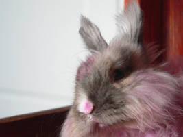 my rabbit by zojj