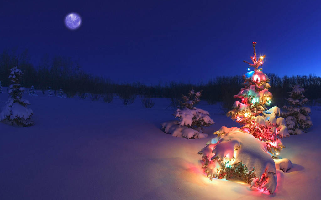 Colorful Christmas Tree Hd Widescreen Wallpapers 1 by DarkEagle2011