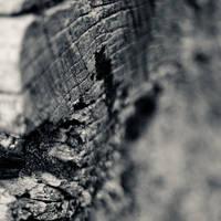 Scarification by arctoa