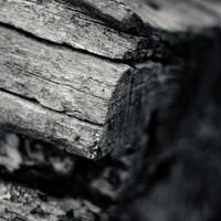 Driftwood by arctoa