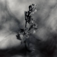 Graveflower by arctoa