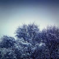 The Freezing Process by arctoa