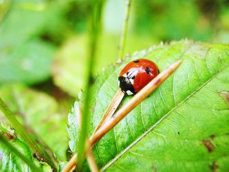 Ladybird by BlackyKitten