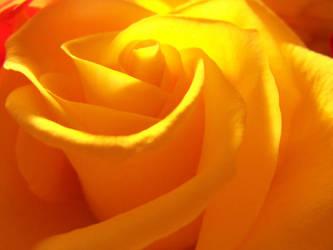 Mellow Yellow by DownsideUpside