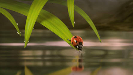 Cernunnos: ladybug by booboo3d