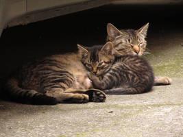 Cat in Japan:Cat on street 03 by iguru71