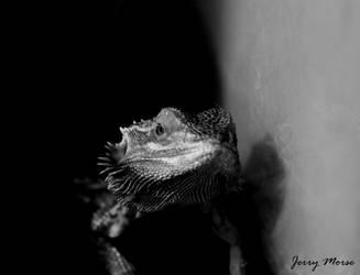 Gilly by JerryMorsePhotograph