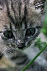 Grass stalker by JAHphoto