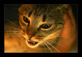 true faces of the cat 2 by li-bra