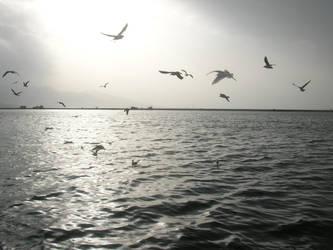 Aegean birds by canerator