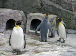 Penguins by FubukiNoKo