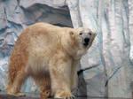 polar bear 2 by FubukiNoKo