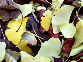 yellow fall by FubukiNoKo