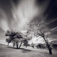 Trees II by tonchee