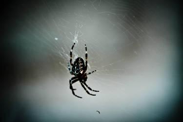spider by crovenx