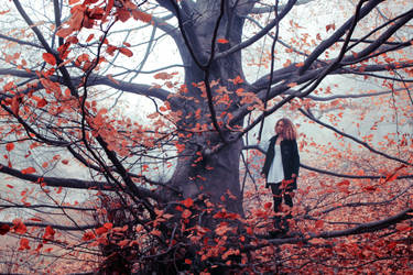 automne tardif III by l0ndon-boulevard