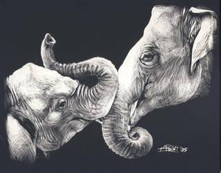 elephants by dstroh